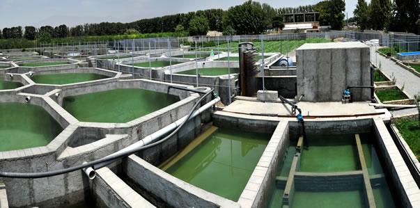 1. ( طرح پرورش ماهی کپور ( گرم آبی